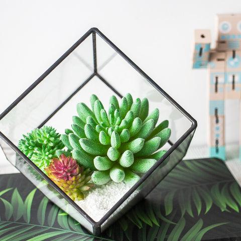 Inclined Cube Terrarium