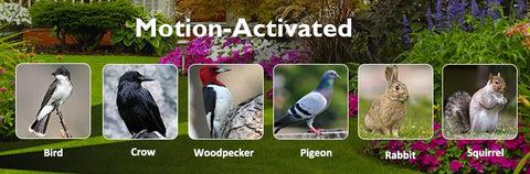 Owl Garden Protection | yoyowiz