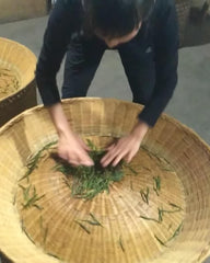 my friend prepares hou kui leaves on the baking tray